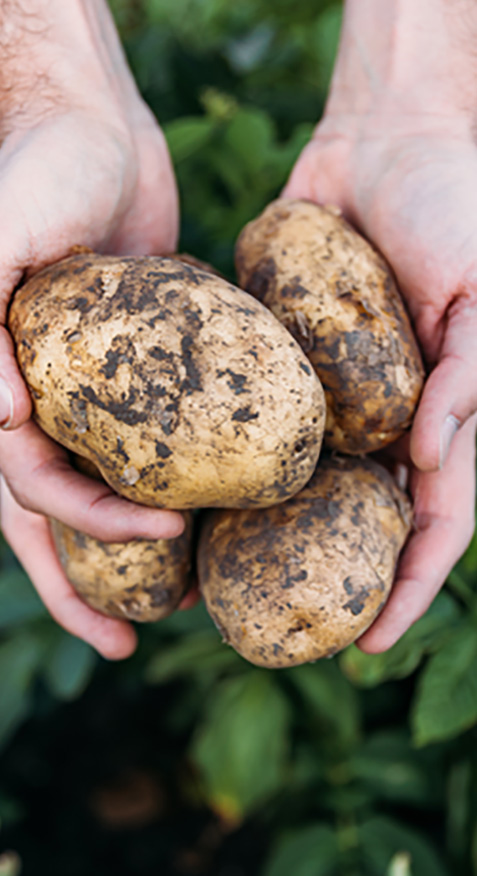 potatoes-cropped