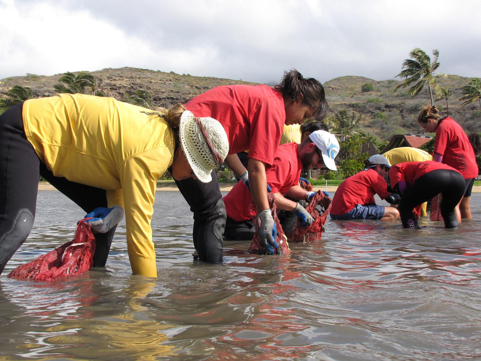 Invasive species eradication